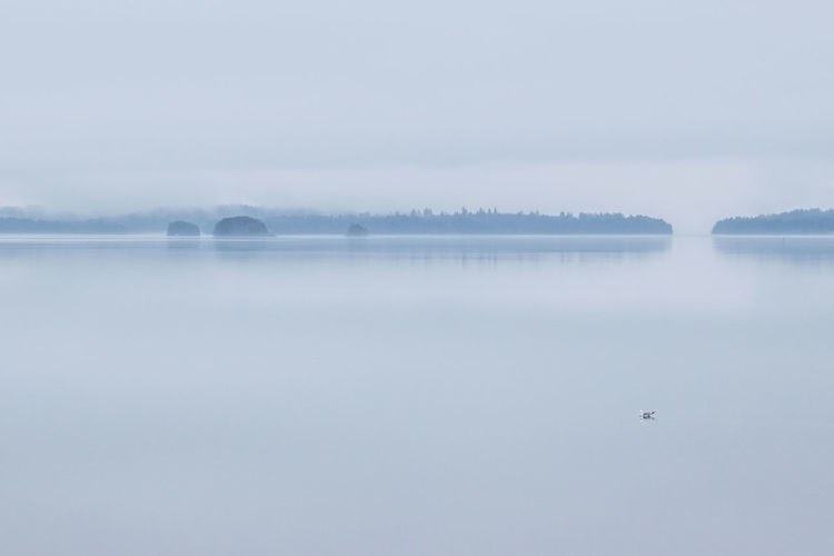 Animal Themes Animals In The Wild Beauty In Nature Bird Cold Temperature Day Fog Lake Nature No People Outdoors Reflection Scenics Sky Tranquil Scene Tranquility Water Weather Winter