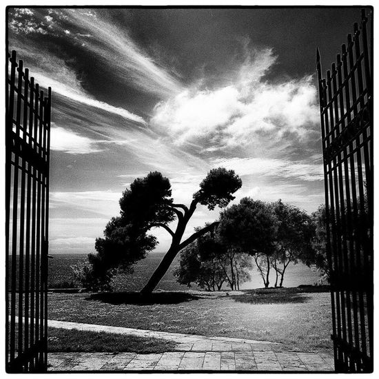 Monochrome Photography Tree Sky Auto Post Production Filter Cloud Palm Tree Footpath Tranquil Scene The Way Forward Tranquility Solitude Long Growth Outdoors Day Nature Scenics Cloud - Sky Countryside Remote Tall - High