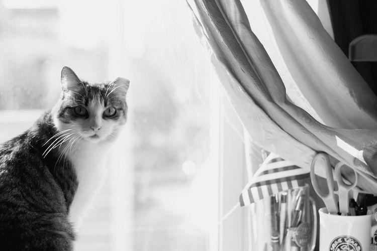 Animal Themes Black & White Black And White Blackandwhite Cat Cat Lovers Cat Photography Cats Cats Of EyeEm Cat♡ Domestic Animals Domestic Cat Feline Indoors  Light Light And Shadow Pet Pet Love Pet Photography  Pet Portrait Pets Pets Corner Window