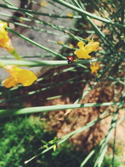 EyeEm Best Shots EyeEm Nature Lover Ladybug Spring