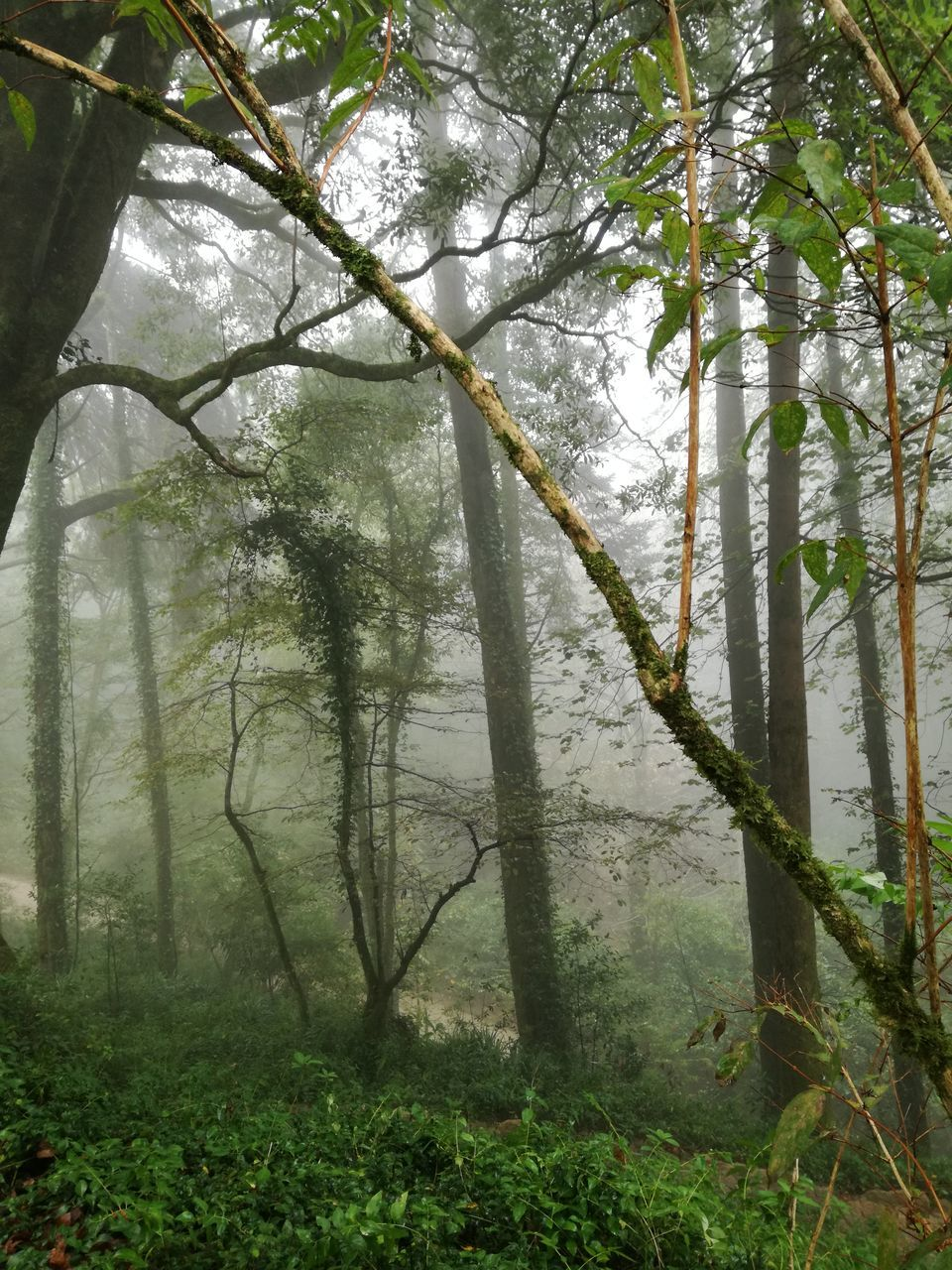 View Of Trees In The Forest During Foggy Weather