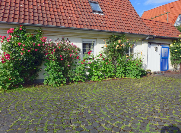 Architecture Bouldering Building Exterior Built Structure Cobblestone Flower Front Or Back Yard Green Color Growing House Just Around The Corner KopfSteinPflaster No People Plant Residential Building Residential Structure Streetphotography Walking Around The City