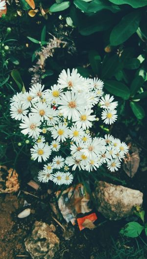 Babys Breath Flower Head Flower Water Leaf Springtime High Angle View Close-up Plant In Bloom Plant Life Daisy Blossom Petal Blooming Dahlia