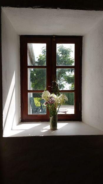 House Faial Island Azores Açores - Portugal Old Window Flowers Sunny Stone Wall
