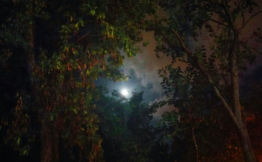 Trees Moonlight No People Magical secene💫🌌 Changing Seasons From Where I Stand Every Picture Tells A Story... Night Picture Protecting Where We Play Urban Skyline At Home Sweet Home