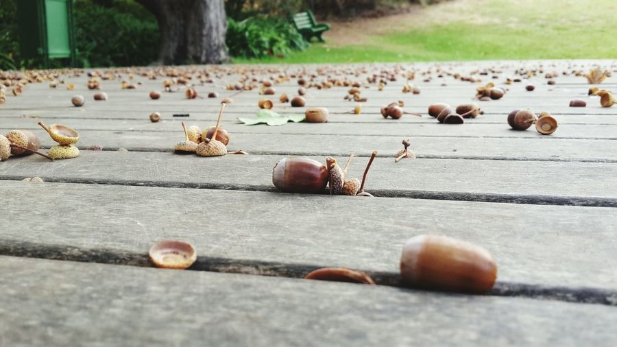 Acorns fallen on wooden deck