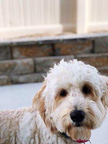 One Animal Dog Pets Domestic Animals Mammal Animal Themes Focus On Foreground