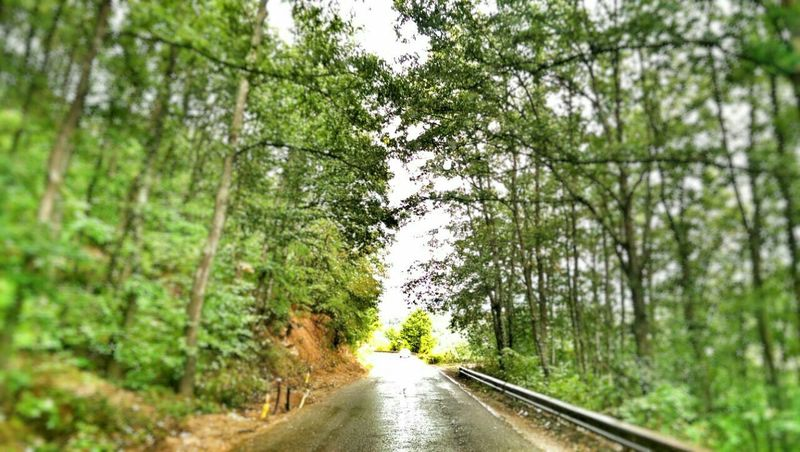 Focus On Your Destination Destination....you The Long Road Home Taking Small Steps Through Life Into The Woods Green EyeEm Trees Just Driving That Fresh Air 🌲 My Best Photo 2015