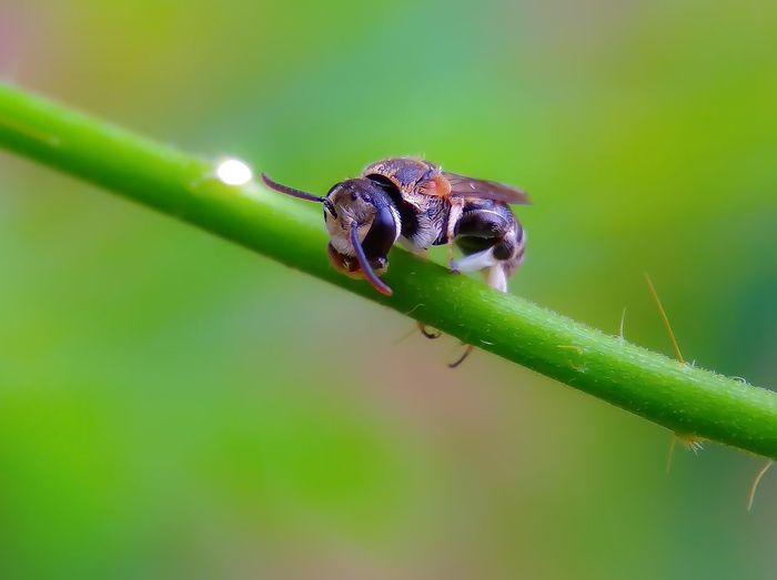 Bee 😊😊🇲🇨🇲🇨 Flying Macro Macro Photography Macro Nature Bee Beauty In Nature Rantauprapat #photography #landscape #nature #photography Forest Small EyeEm Best Shots Lanscape #urbanana: The Urban Playground #beautiful Photo #picoftheday Growth