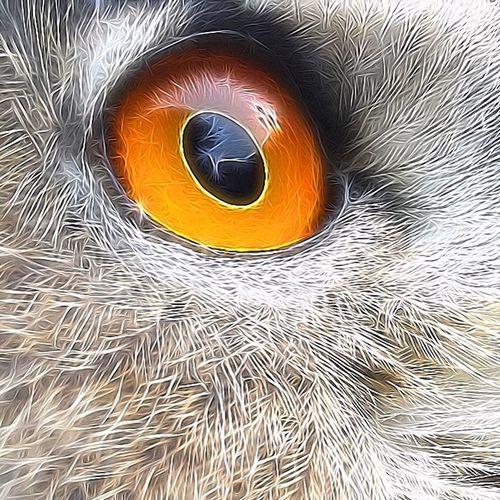 Balous Eye 💕 EuropeseOehoe Eagleowl Owl Art ArtWork Art Bird Photography EyeEm Birds Owls💕 Bird Birds