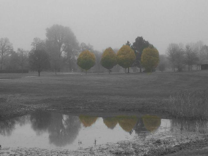 Golfing Wörthsee