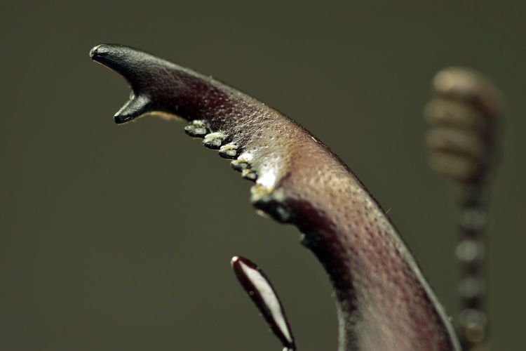 Extreme close-up of insect claw