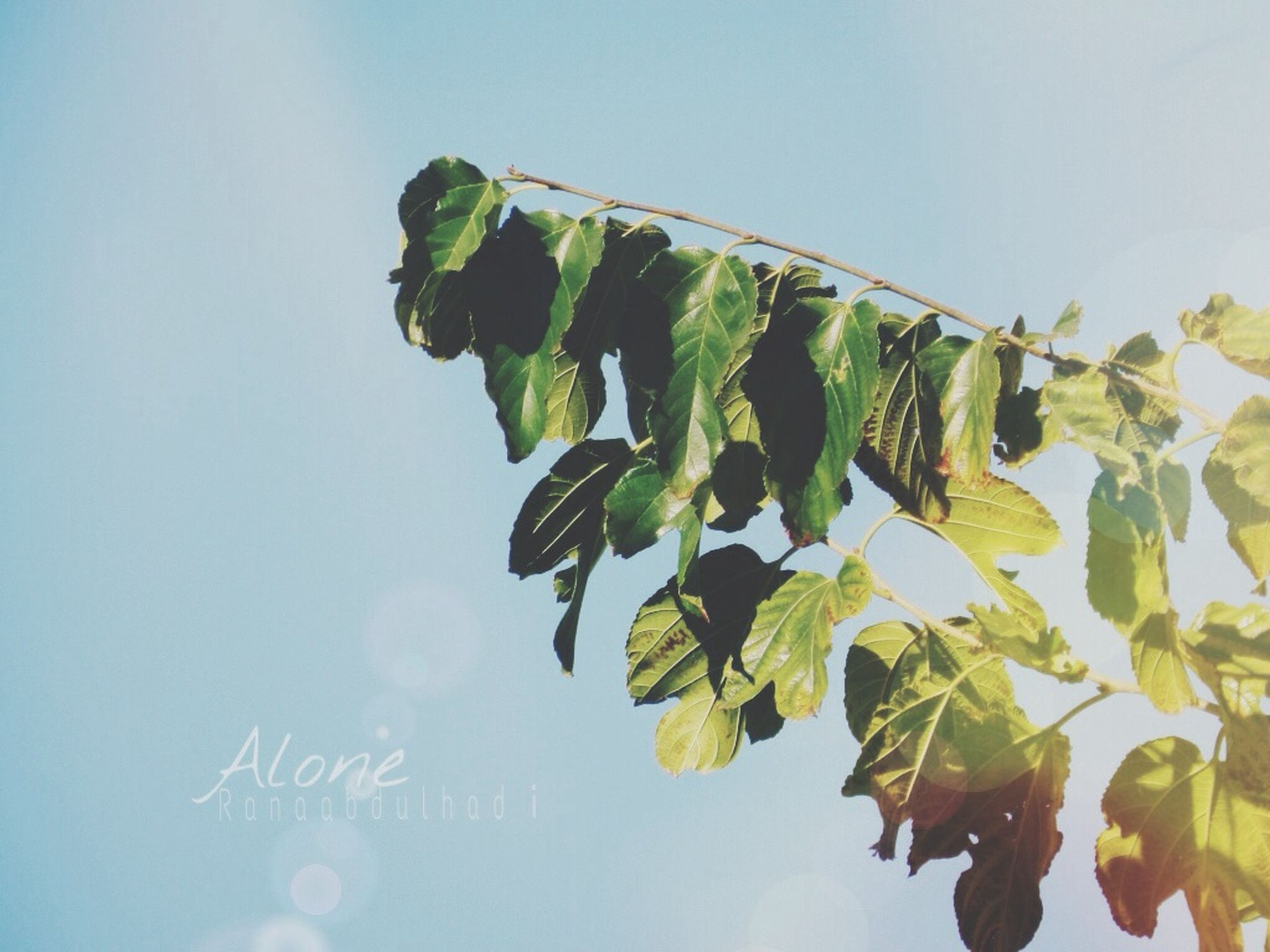 low angle view, leaf, green color, clear sky, sky, growth, nature, day, blue, plant, close-up, outdoors, no people, copy space, tree, beauty in nature, text, sunlight, tranquility, green