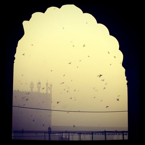 Early morning at a Mosque in Olddehli India . Dehli birds morning travel jj instagram