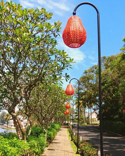 Laguna Phuket Phuket,Thailand Thailand BangTao Angsanavelavaru Banyan Tree Tree Hanging Sky Lantern Growing Oil Lamp Lighting Equipment Blooming Petal Chinese Lantern Festival Christmas Decoration