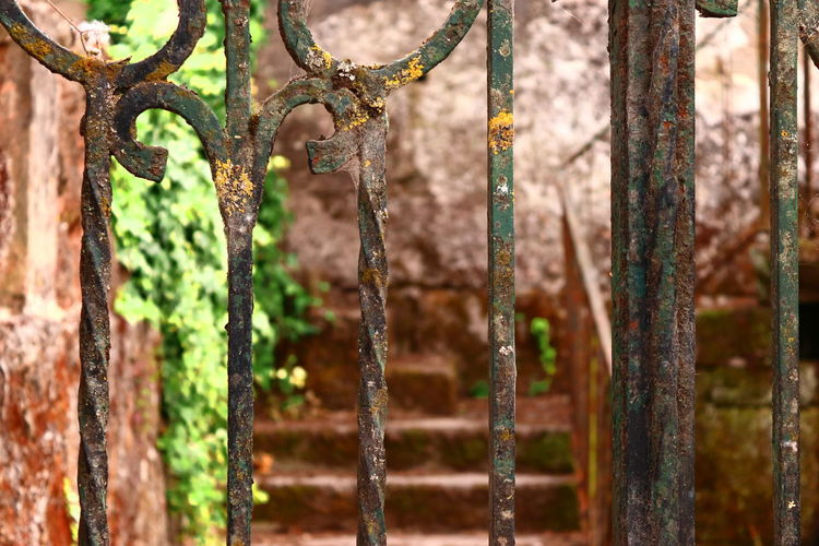 Close-up of rusty metal fence against trees