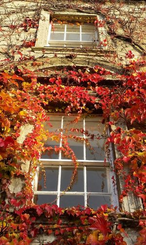 'October Day' (1 of ?) Autumn🍁🍁🍁 Autumn Leaves Windows Autumn Collection Colour Explosion Exceptional Photographs Colourful No Edit/no Filter Autumn Colors October Cotswolds England 🌹 EyeEm Best Shots EyeEm Masterclass EyeEm Nature Lover Fall Beauty Tetbury Gloucestershire