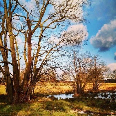 Spring Trees Berlin Island Nature Igs_world Igs_berlin Igs_europe Ig_germany Igs_deutschland Ig_europe Insta_europe Europe Germany Deutschland