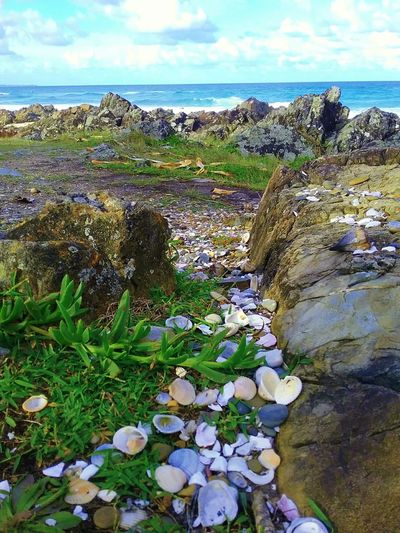 By the Sea Holiday Outdooors Water Beach Geography Daylight Nature Sea Travel Seashell Plant Vacation Seascape Coast Growing