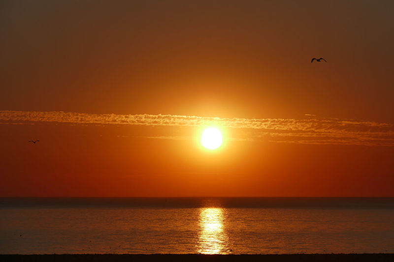 Dieppe Dieppe Normandie Dieppe France Normandie Normandie, France Sunset_collection Orange Color Orange Sky Orange Sky Sunset Horizon Over Water Horizon Water Sea Sunset Flying Beach Gold Colored Sunlight Sun Silhouette Reflection Seascape Coast Romantic Sky