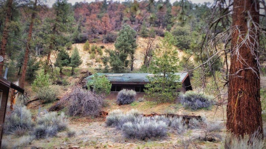 Camp Abandoned