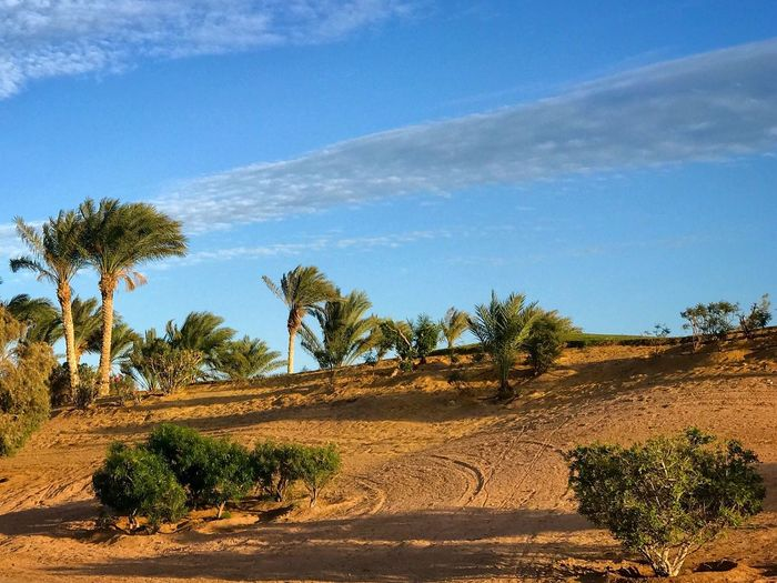 El Gouna El Guna El-Gouna El-Guna Egypt Ägypten  Palms Palmen © MJ ® Palm Tree Tree Nature Growth Scenics Day Outdoors Landscape No People Sky Beauty In Nature Arid Climate