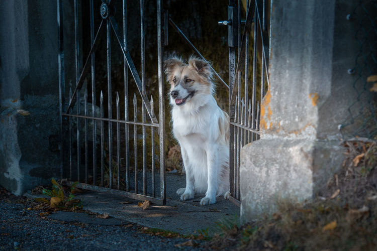Dog looking away while sitting by gate