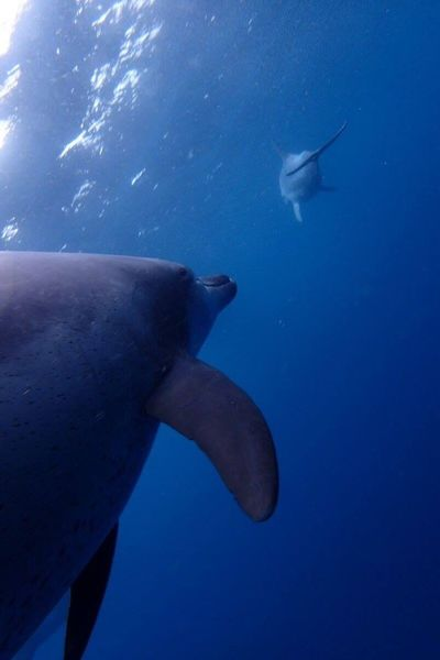 I am going too Underwater Nature Sea Life Adventure Outdoors Swimming Happy Skin Diving Dolphin