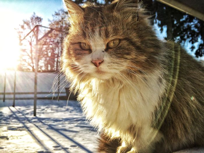Close-up of cat during winter