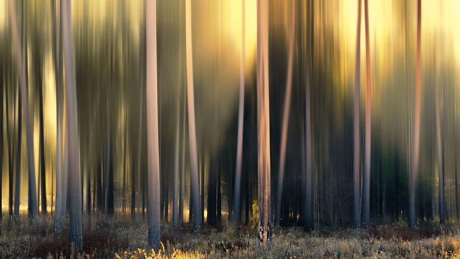 Panoramic Shot Of Sunlight