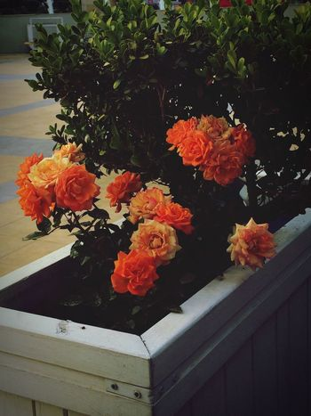 Guller Turuncu Yeşilisev Doğayıseviyorumm Yazgeliyor Güneşyakıyor