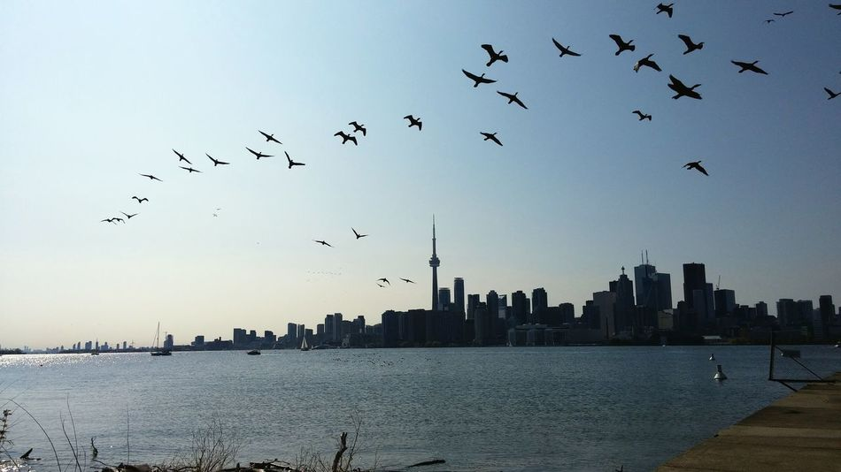 CN Tower - Toronto Toronto Islands