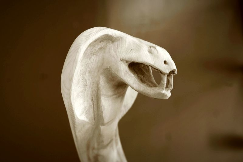 Close-up of snake skeleton