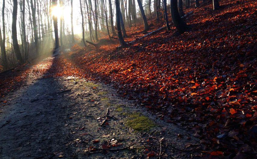 Nature EyeEm Nature Lover Autumn Autumn Colors