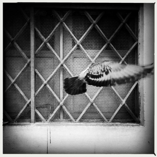 Pidgeon  Rome Mono Photo Street Photography Monochrome