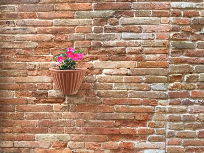 Flowerpot Brick Wall Minimalism Outdoors Showcase July Architecture Mediterranean  Summer Still Life Adapted To The City
