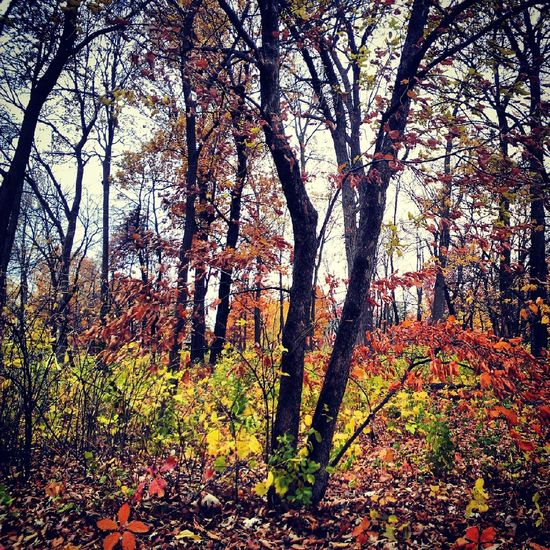 fall beauty Nature Taking Photos Relaxing Hello World