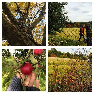 Мы с @jasongrey88 отлично провели выходные! Собирали яблоки, лазили на деревья, пили вкусный чай, катались на качелях! Самые простые вещи могут радовать меня больше всего! Наша маленькая семья завела традицию - ездить в Тарусу через выходные! ❤️