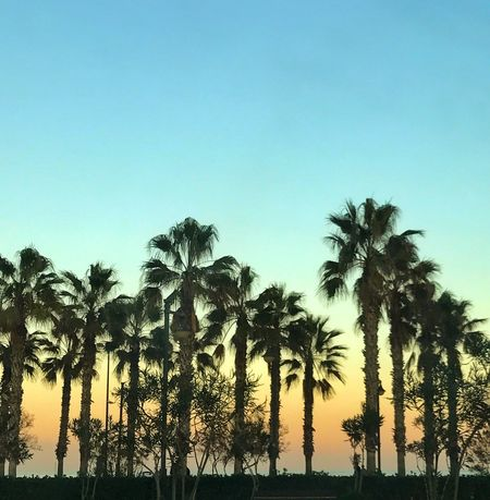 Palm Tree Tree Nature Scenics Sea Clear Sky Tranquil Scene Water No People València SPAIN Relaxing Sunset Beach Nature Paradise