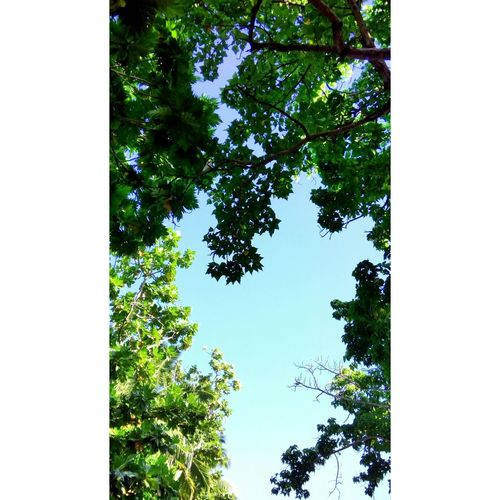 Trees Blue Sky 🌳