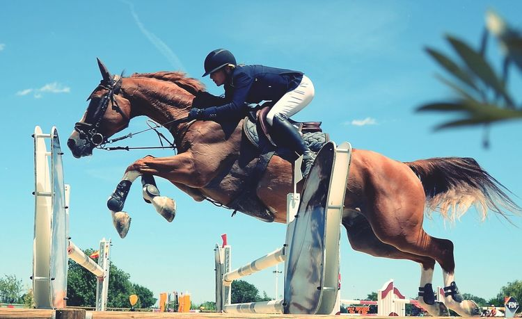 Original Experiences Low Angle View Sky Blue Mammal Outdoors Day Sunny Animal Horse Horse Jumping Jumping Bridle Animals Showcase June Sport Horse Riding People Let's Go. Together.