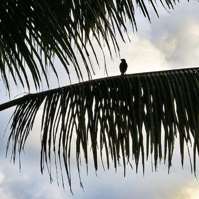 Quel est cet oiseau? #mauritius Silhouette Birds Mauritius Naturehippys Nature_perfection Ic_nature Natureonly Rsa_nature Nature_obsession Nature_uc Ig_captures_nature