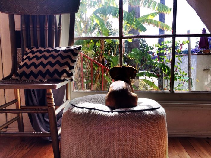 Pet Dog Window Chair Indoors  Sofa Table Sitting Relaxation Comfortable Domestic Life Day Solitude