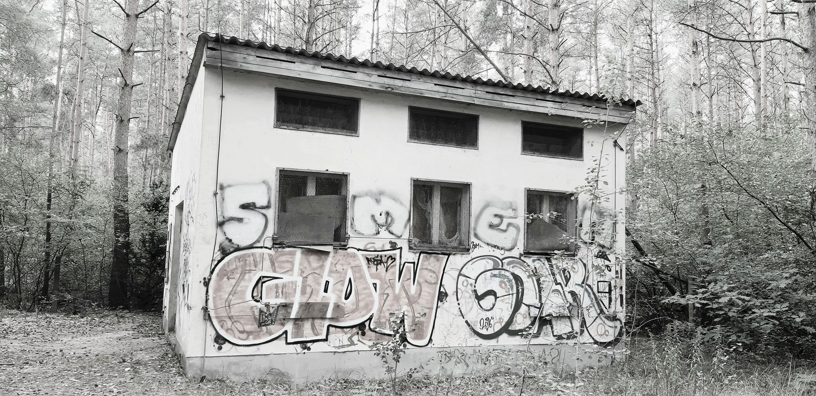 tree, built structure, plant, architecture, building exterior, day, no people, text, communication, nature, western script, outdoors, window, old, building, forest, wall - building feature, land, graffiti, abandoned, message