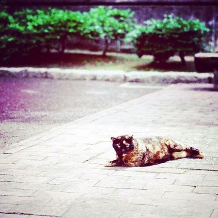 OSAKA Cat Mylife