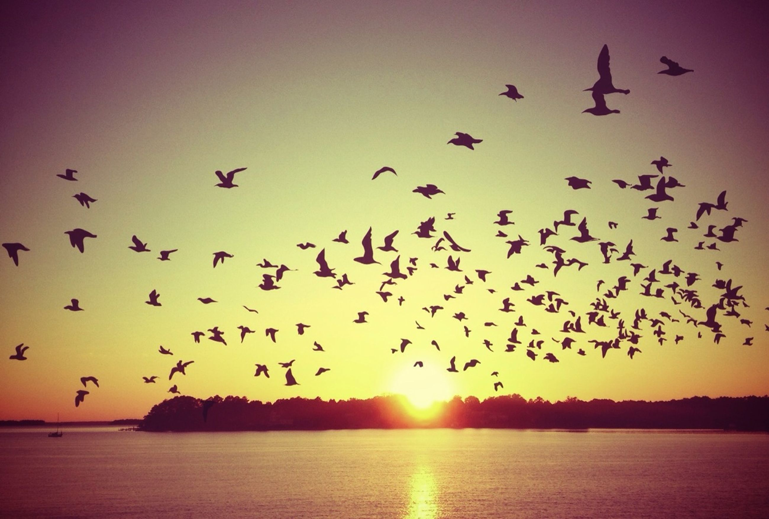 bird, flying, animal themes, sunset, animals in the wild, wildlife, sun, water, flock of birds, silhouette, scenics, sky, mid-air, beauty in nature, sea, tranquil scene, nature, clear sky, spread wings