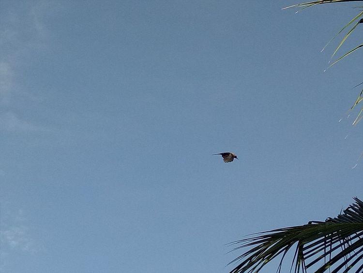 Bird Taking Photos Alandur Chennai