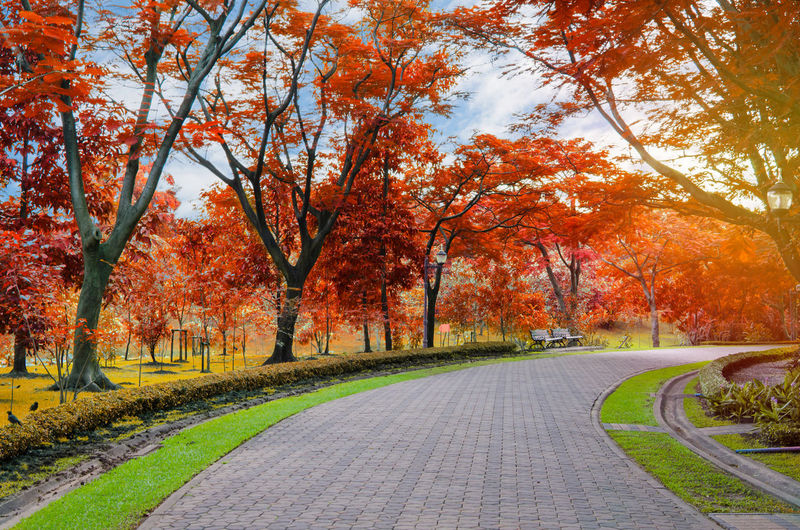 Autumn Tree Plant Change Beauty In Nature Road The Way Forward Direction Nature Leaf Transportation Plant Part Scenics - Nature Tranquility Orange Color Tranquil Scene No People Landscape Day Country Road Outdoors Treelined Autumn Collection