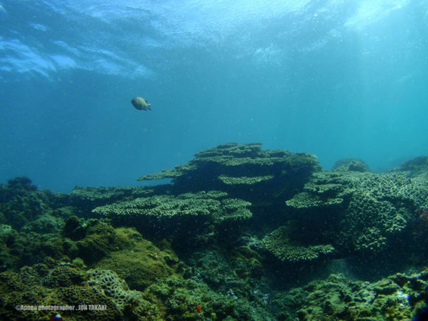 Hachijo-island Tokyo,Japan In The Sea Sea_collection Coral