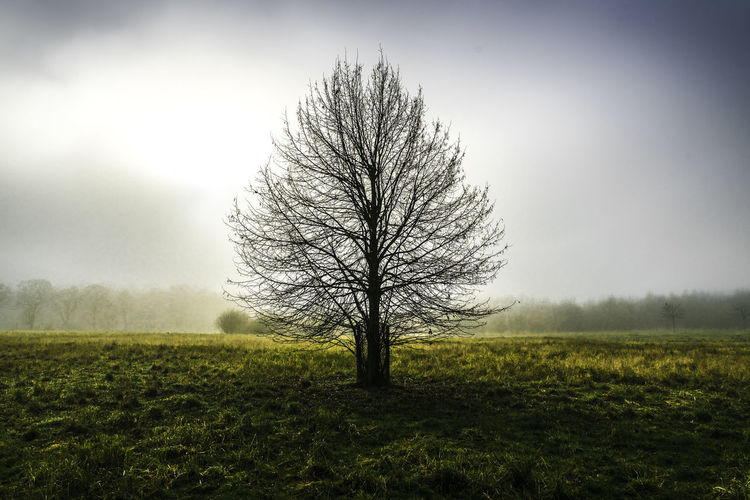 Tree on a foggy morning. Bare Tree Beauty In Nature Day Landscape Nature No People Outdoors Tranquil Scene Tranquility Tree